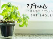 7 Plants