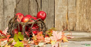 Visit your local orchard for awesome autumn activities