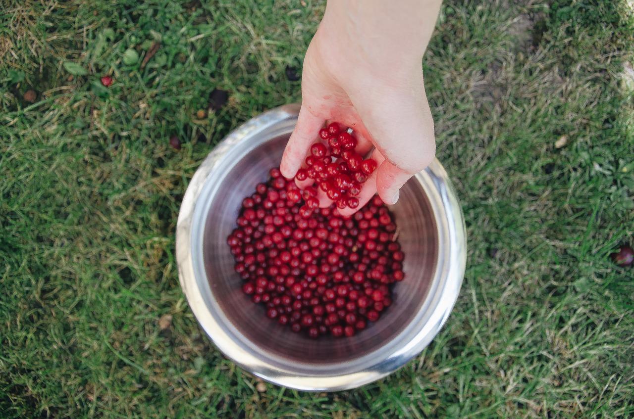 berries-792806_1280