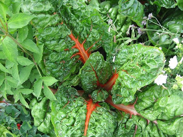 vegetables-1092517_640
