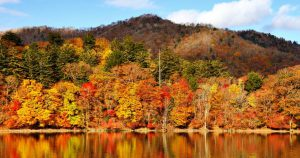 The Ultimate Fall Activities Checklist You Will Love